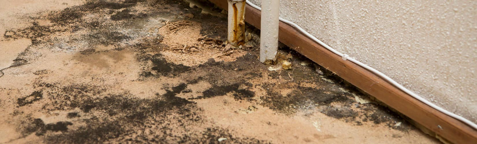 Mold Remediation Service in Durango, Farmington, Cortez, and Pagosa Springs