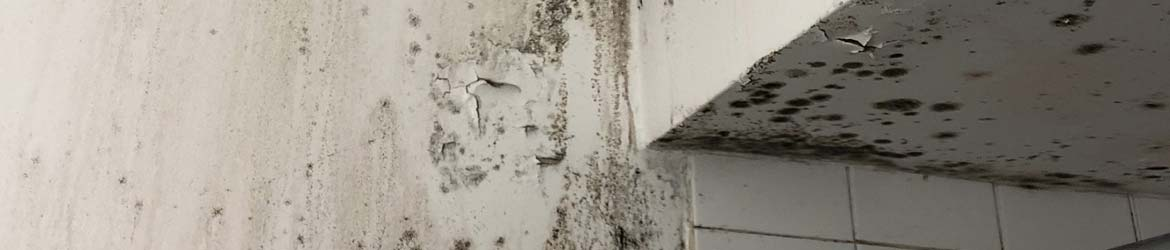 Primary Areas or Causes of Mold