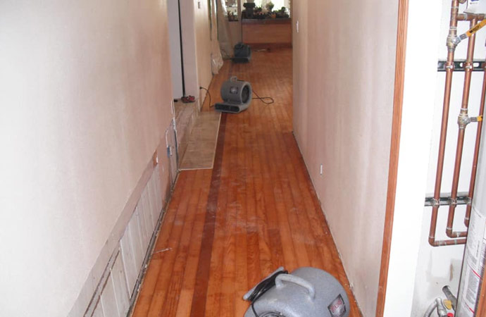 Wooden Floor Mold Remediation